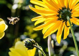Mire jó a tiszta méhpempő?