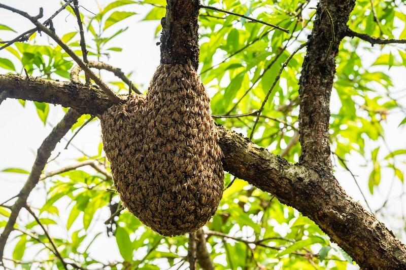 Mire jó a tiszta méhpempő