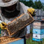Méhész tanfolyam Székesfehérvár